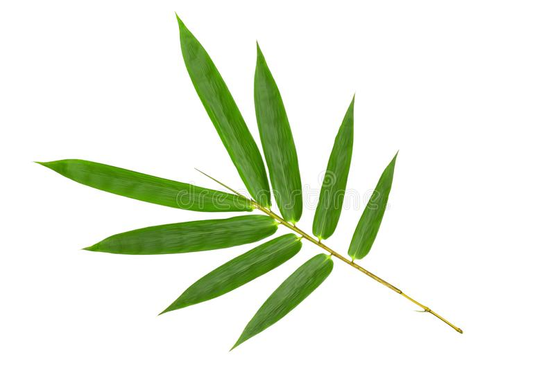 Green bamboo leaves pattern isolated on white background,Front view.  royalty free stock image