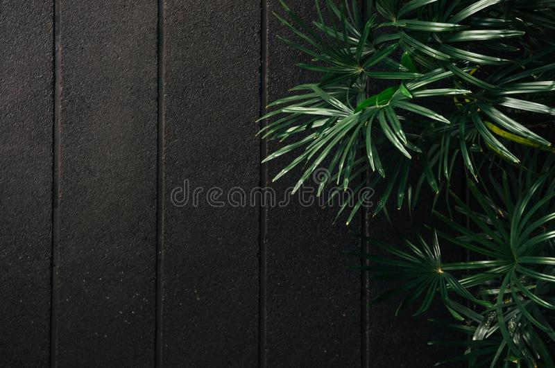 Green Bamboo palm leaves with black concrete wall dark tone image stock photos