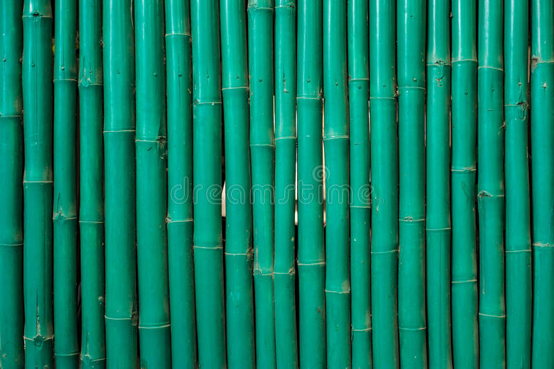 Green bamboo pattern stock photography