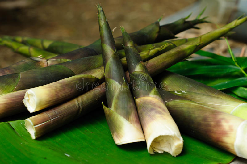 Green bamboo shoots on leaf banana royalty free stock images