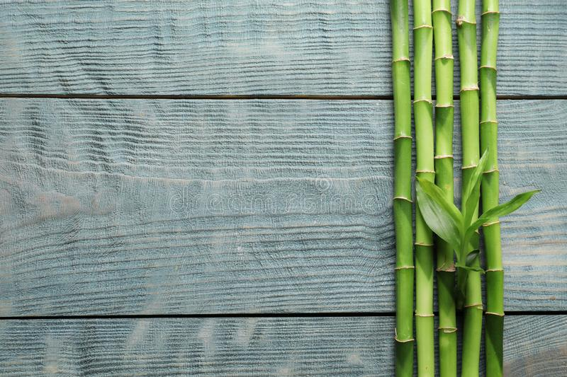 Green bamboo stems and space for text on wooden background. Top view royalty free stock images