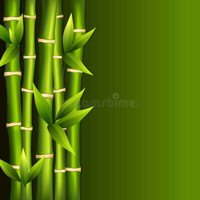 Green bamboo stock illustration