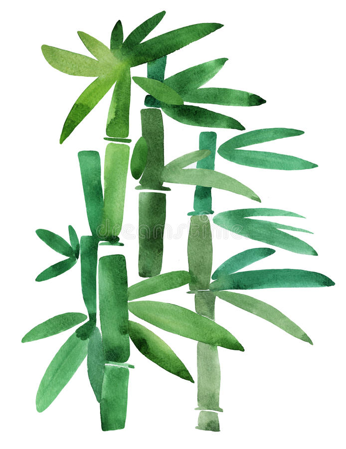 Download Green Bamboo on a white stock illustration. Image of brushstroke - 25689874