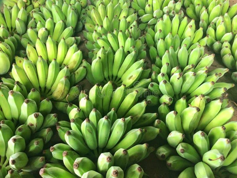 Green banana royalty free stock photo