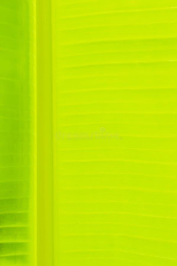 Download Green banana leaf stock image. Image of eating, garden - 33547475