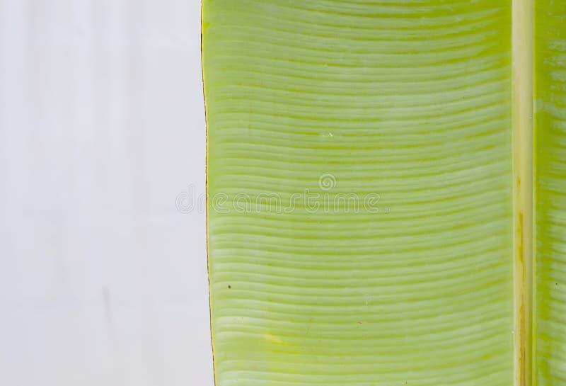 Download Green banana leaf stock photo. Image of diagonal, color - 33548024