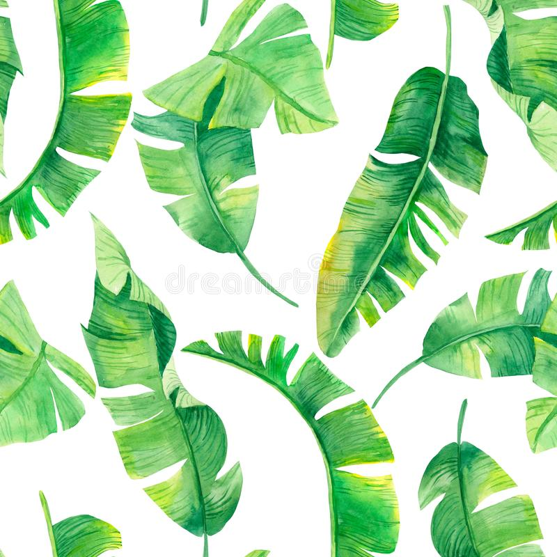 Green banana palm leaves on the white background.Tropic seamless pattern. Tropical jungle foliage illustration. Exotic plants. Sum royalty free illustration