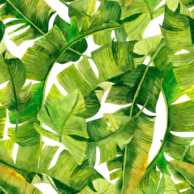 Green banana palm leaves on the white background.Tropic seamless pattern. Tropical jungle foliage illustration. Exotic plants. Sum stock illustration