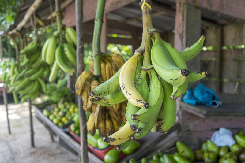 Green Bananas - Colombia. Green bananas shop on the side of the road fron Santa Marta to Riohacha stock image