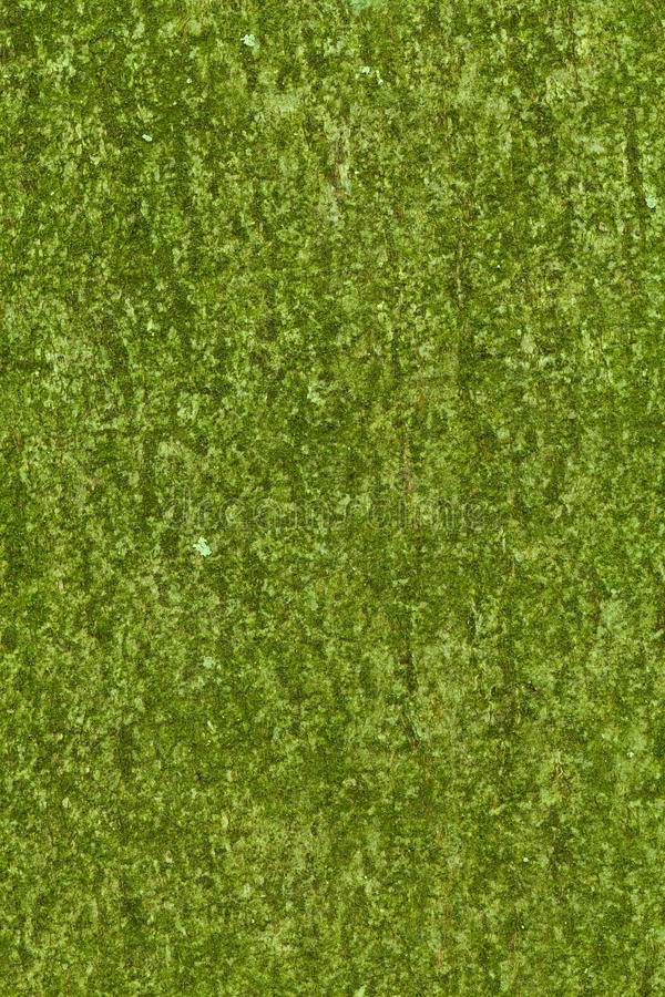 Download Green bark texture stock image. Image of mossy, park - 19443651