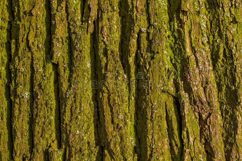 Green bark texture royalty free stock photos