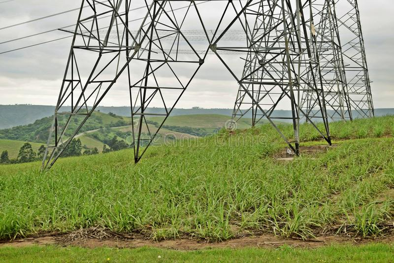 Green at the base. Sugar cane plants grow at the base of electricity pylons in a rural part of Natal SA stock images