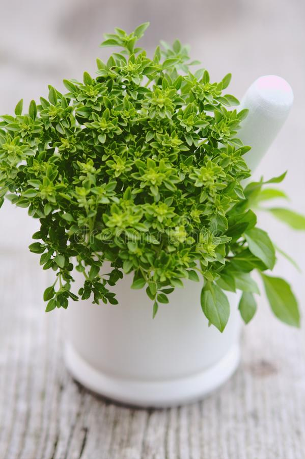 Free Green Basil In Mortar On Wooden Background Royalty Free Stock Images - 32557239