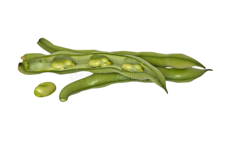 Download Green beans stock photo. Image of common, fruit, isolated - 16526764