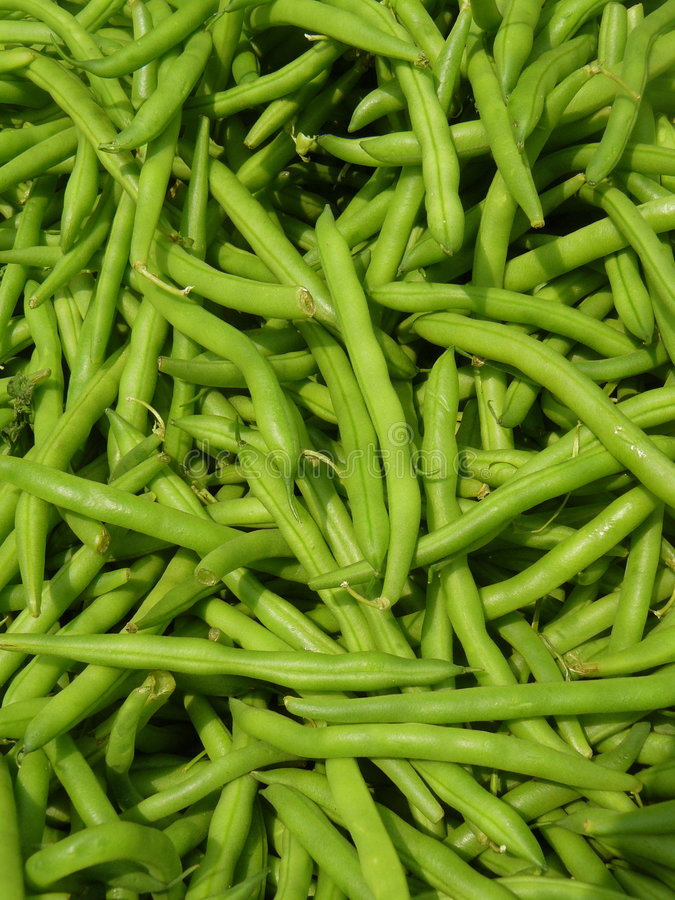 Download Green Beans stock image. Image of farm, grown, sustainable - 5403657
