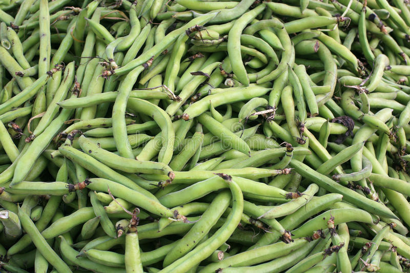 Download Green beans stock photo. Image of nutrition, green, fresh - 40485960