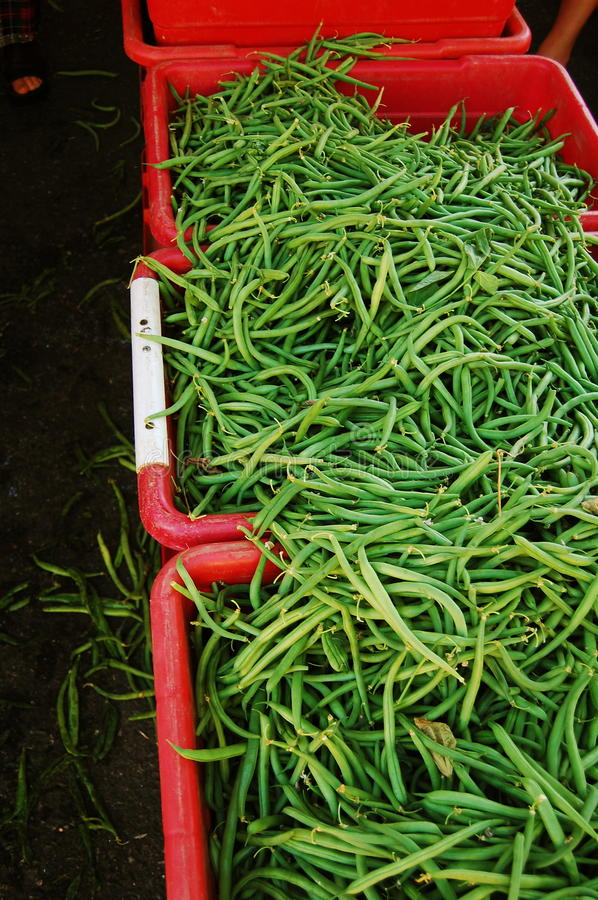 Free Green Beans In Red Bins Stock Photo - 15295190
