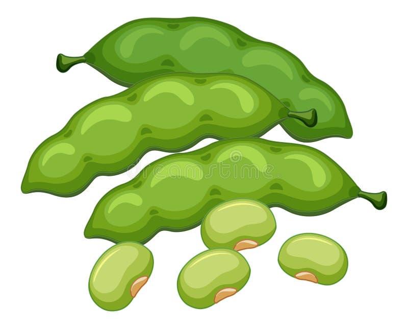 Green beans on white background royalty free illustration