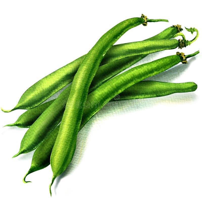 Green beans on white background stock illustration