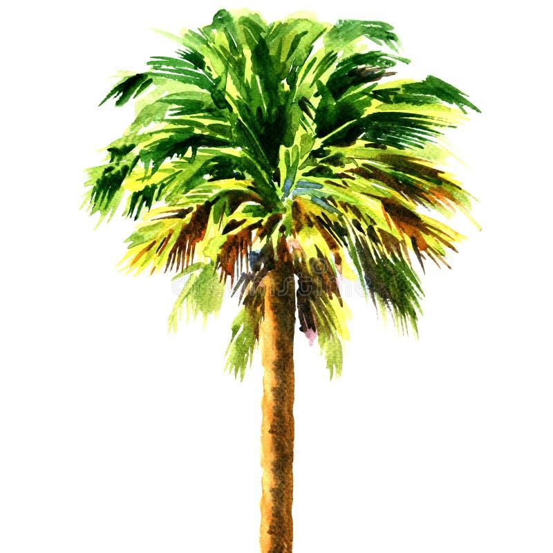 Green beautiful palm tree isolated on white background stock illustration
