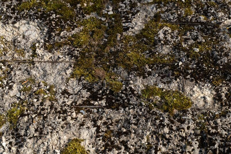 Moss on the stone wall. Green beautyfull moss on the stone wall stock image