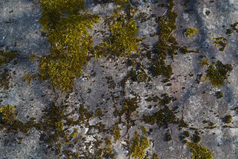 Moss on the stone wall. Green beautyfull moss on the stone wall royalty free stock photo