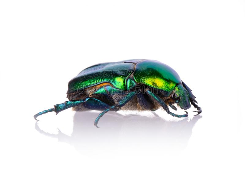 Green beetle close-up with reflection stock photo