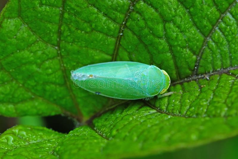 Download Green beetle in the park stock image. Image of wilderness - 10386177