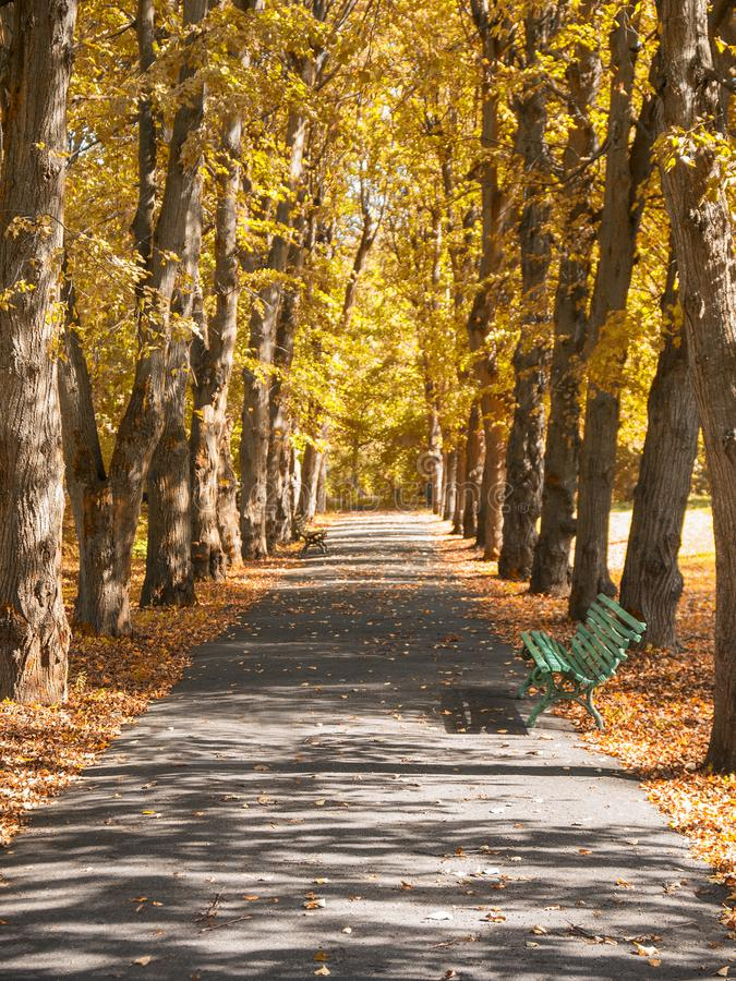 Green bench in the alley in the autumn park stock photography