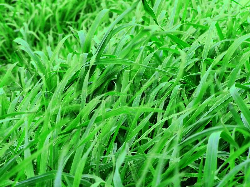 green betar royaltyfri bild