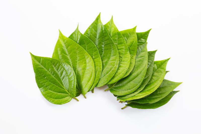 Green betel leaves, Fresh piper betle on white. Background royalty free stock image