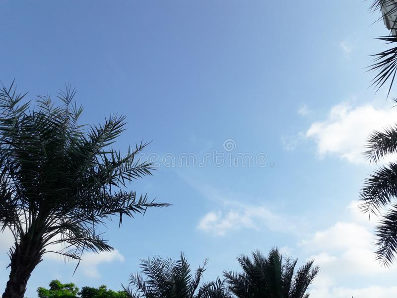 Green Palm tree in the garden under the blue sky. Green big and tall palm tree in the garden under the blue skyn royalty free stock images