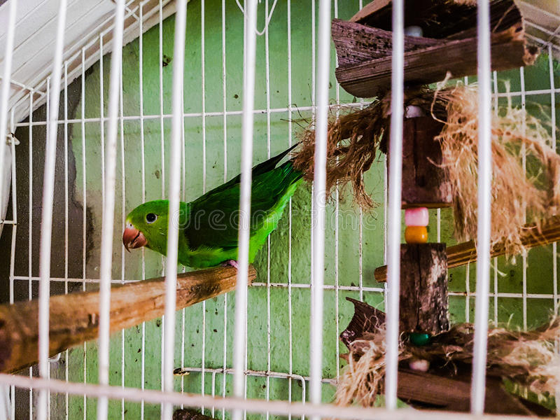 Green bird caged stock photo
