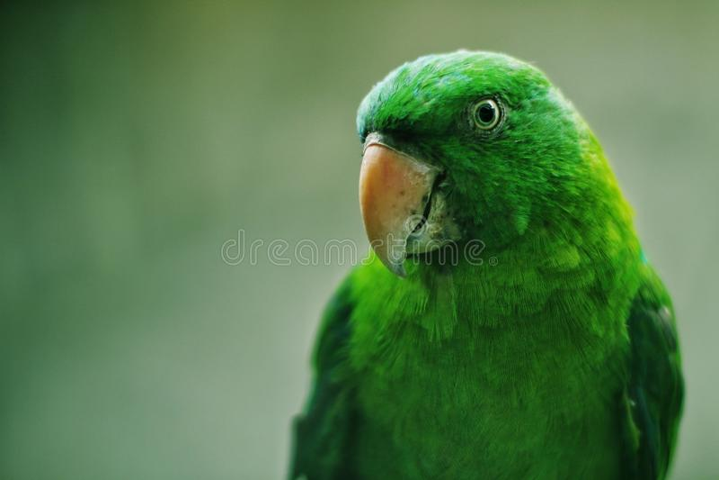 Green Bird stock photography