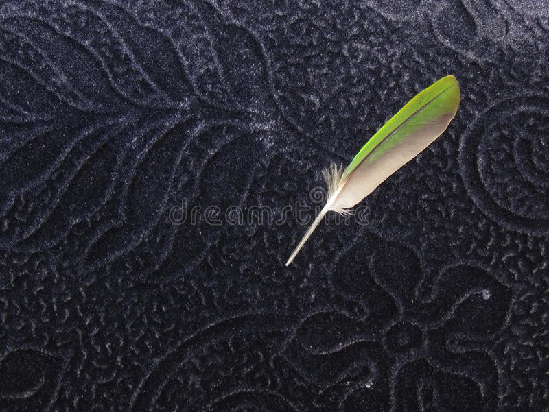 Download Green Bird Quill Feather On Blue Velvet Background Stock Photo - Image: 28186192