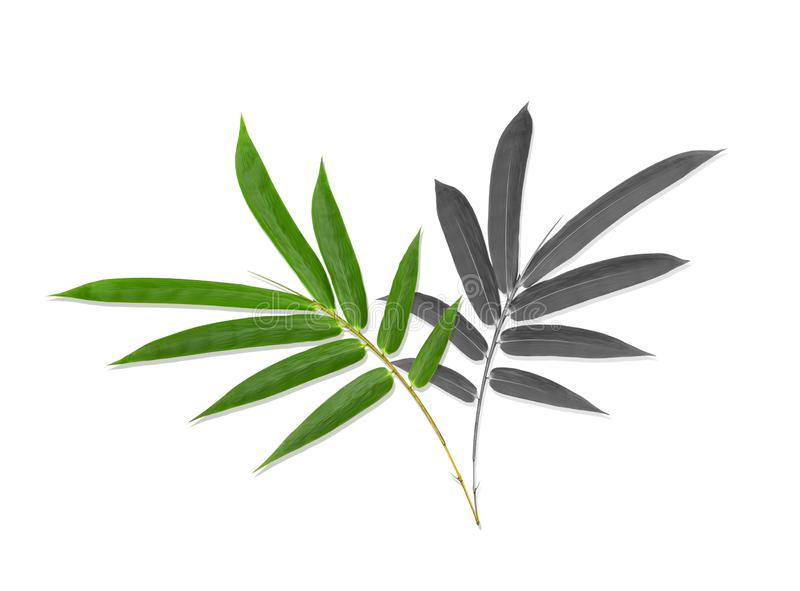 Green and black bamboo leaves pattern isolated on white background.  royalty free stock photos
