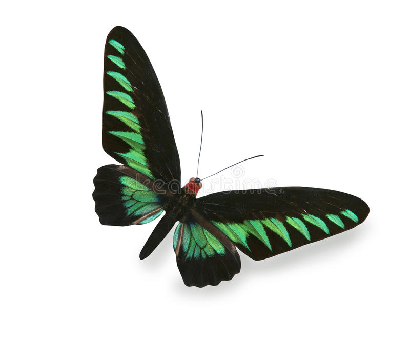Green and black butterfly isolated on white stock photos