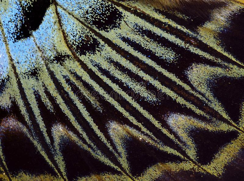 Green and black camouflage texture of Cambodian Junglequeen. Butterfly wing surface, beautiful pattern, seamless, white, light, gray, smooth, wall, decoration stock photography