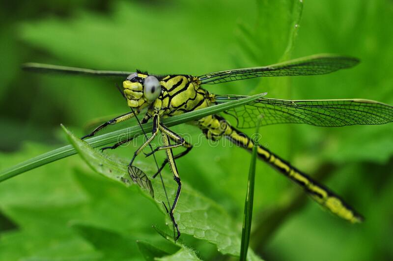 Green And Black Dragonfly On Green Leaf During Daytime Free Public Domain Cc0 Image