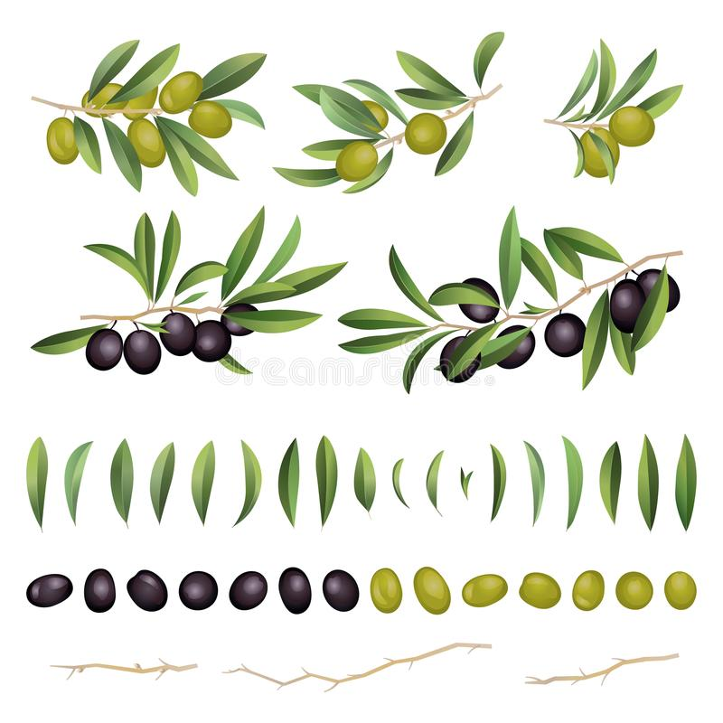 Green and black olives with leaves and branch collection. Vector illustration royalty free illustration