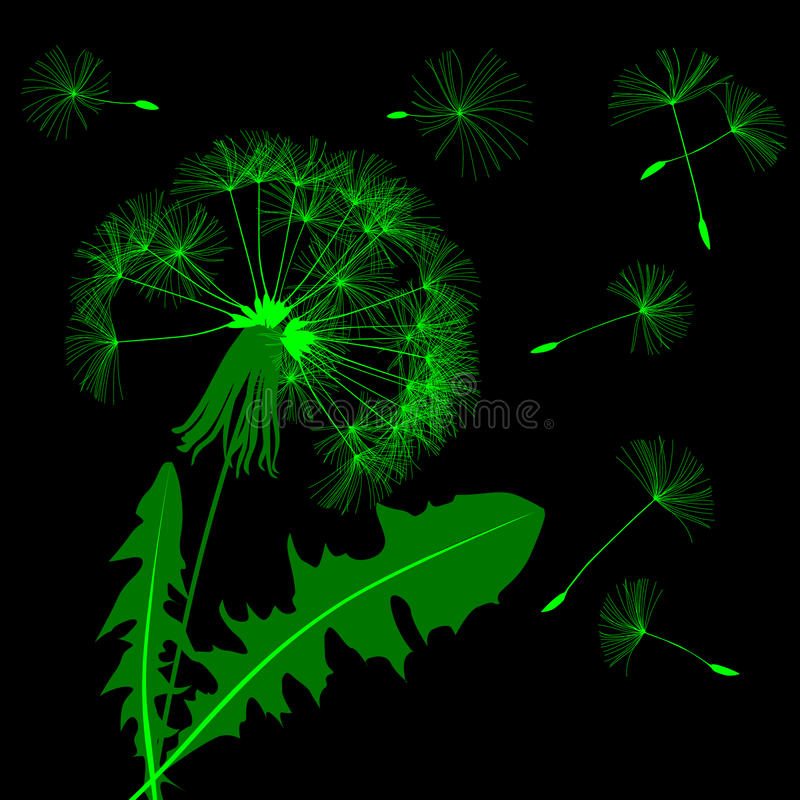 Green blow dandelion silhouette isolated on black royalty free illustration