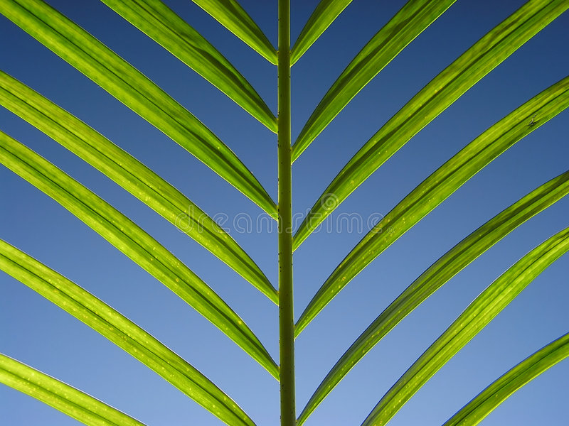 Download Green on blue stock image. Image of graphic, green, detail - 171075