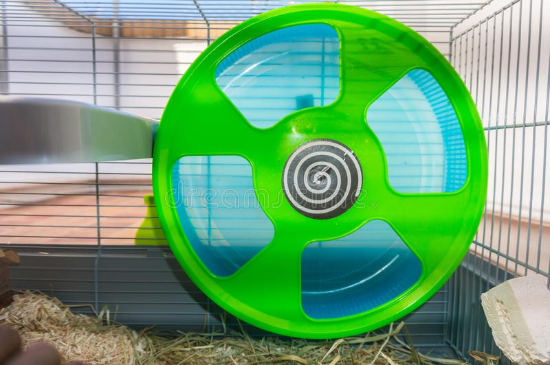 Green and blue hamster wheel stock images