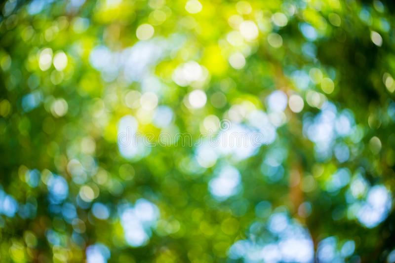 Green and blue summer bokeh for background . natural green blur style from trees. Abstract background,Blurred of green trees lawn stock photo