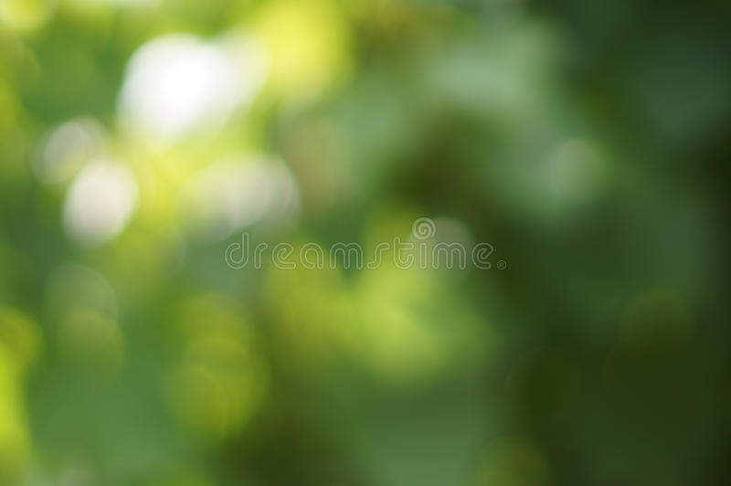 Green blured background. Natural green blured background with bokeh stock photography