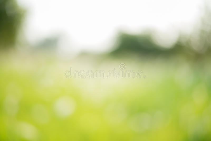 Green blurred background stock photography