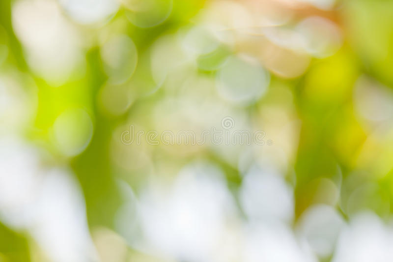 Green bokeh abstract light background royalty free stock images