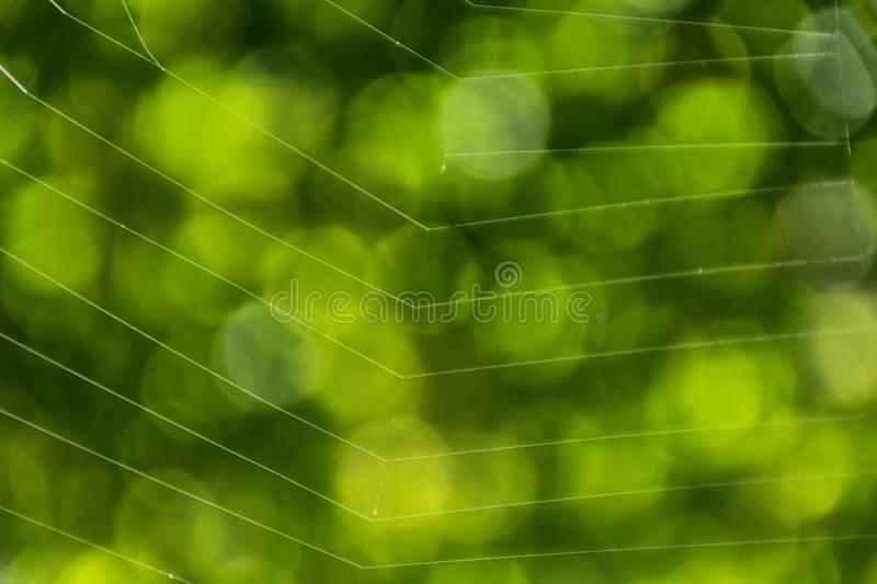 Green bokeh background with close up spider web. stock photos