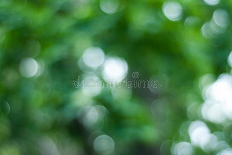 Green Bokeh Background, Green Trees Bokeh, Abstract Summer spring Sunny Texture royalty free stock photo