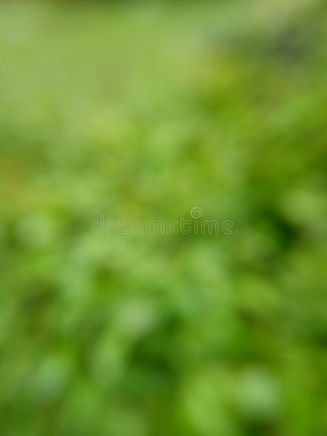 Simple Photo Green bokeh background for your template element design. Green bokeh background for your template element design stock photos